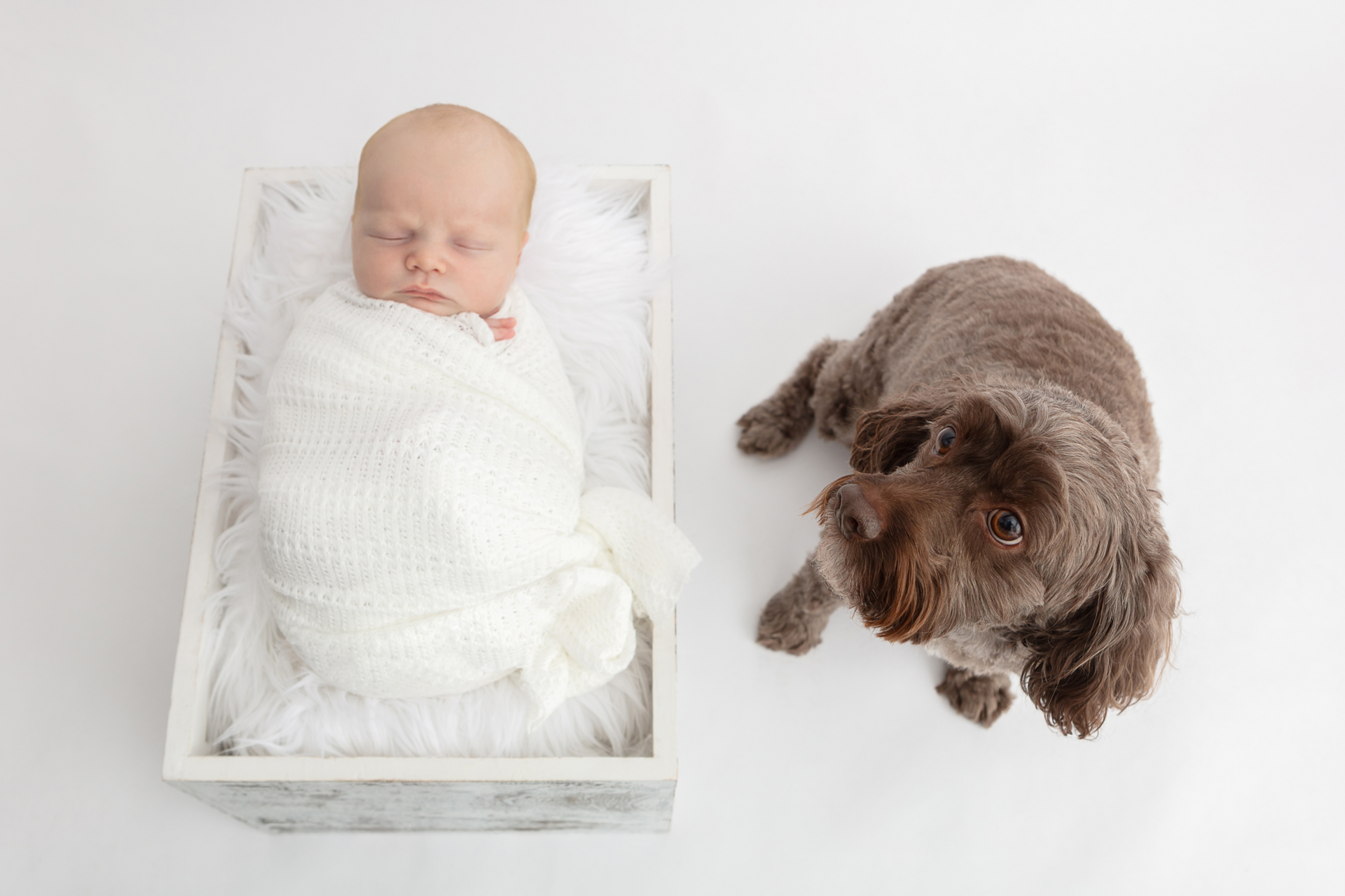 newborn photo with family dog; newborn baby boy wrapped in white; white flokati